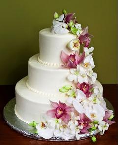 wedding cake tulip