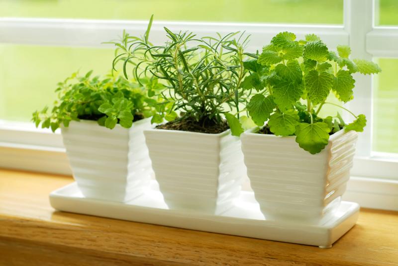 windowsill-herb-garden-is